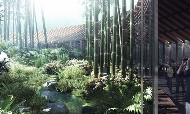 HASSELL reveal immersive Panda Land design