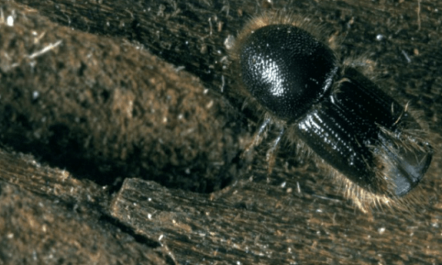 New legislation introduced to prevent spread of spruce bark beetle