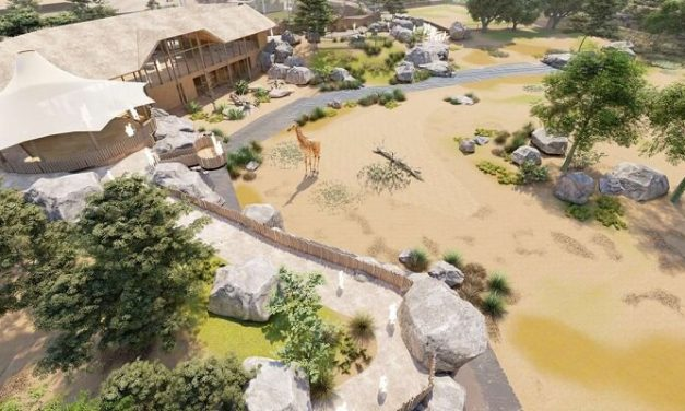 Gillespies to lead new development at Chester Zoo