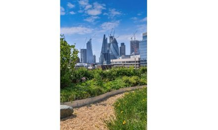 Report highlights London's rise up the green roof league table
