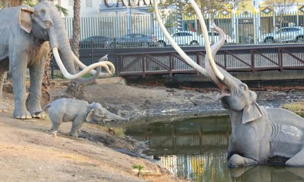 Three concepts unveiled for La Brea Tar Pits masterplan